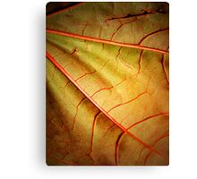 Leaf Abstract- Part 2 Canvas Print
