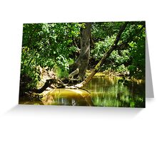 forest and river Greeting Card