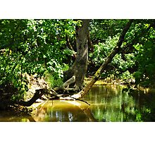 forest and river Photographic Print