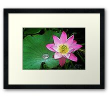 Water Lily Art Series I  / Framed Print