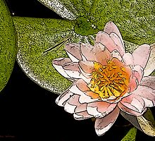 Water Lily Art Series II  /  by Shelley  Stockton Wynn