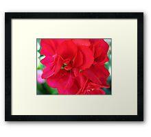 Sweet & Spicy Geranium Framed Print