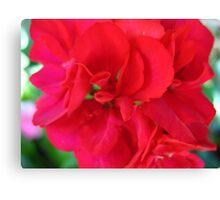 Sweet & Spicy Geranium Canvas Print