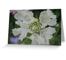 White Wedding Dance Greeting Card