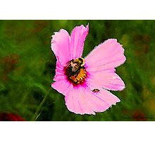 Bumble Bee / Summer / Photographic Print
