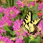 Garden Butterfly I / by Shelley  Stockton Wynn