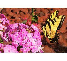 Garden Butterfly II  / Photographic Print