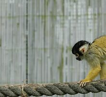 tiperope monkey by jake bartholomew