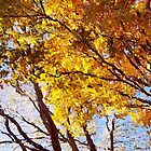 Flaming Trees / by Shelley  Stockton Wynn