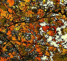 Autumn Gold  / by Shelley  Stockton Wynn