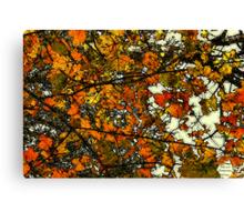 Autumn Gold  / Canvas Print
