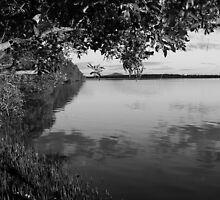 Tranquil Mangrove by Martice