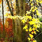 Lone Tree / Autumn in Michigan by Shelley  Stockton Wynn