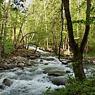 River at Greenbrier by Sandy Keeton
