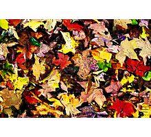 Autumn Pattern  /   Photographic Print