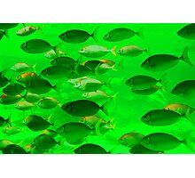 Fishy Business green Photographic Print