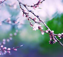 Sakura (3) by Mallorn