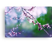 Sakura (3) Canvas Print