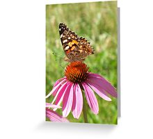 Pretty Painted Lady Greeting Card