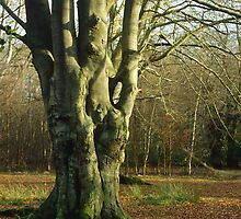 Coppiced Beech, UK 2 by Gary Rayner
