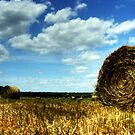 Hayfield and White Clouds by Terence Russell