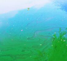 The Study of Algae II by RobertCharles