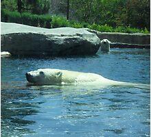 Playful Polar Bears Photographic Print