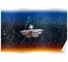 Adventurous Moth Poster