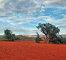 Red Rock/ Red Soil by Barbara Manis
