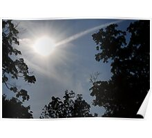 Rays between the trees Poster
