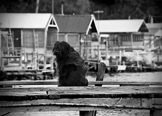 Shaggy Dog by Kristi Robertson