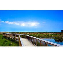 Alachua Sink Boardwalk Photographic Print