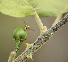 Wasp by kaung