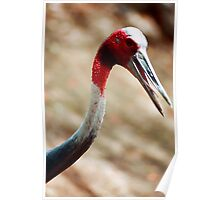 Red headed crane Poster