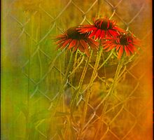 Beauty Along A Country Fence by Diane Schuster