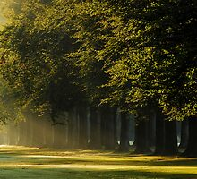 When the morning sun was kissing the beech-trees  by jchanders