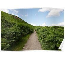 Path up a Hill Between Ferns Poster