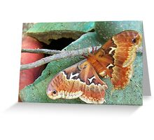 hold on tight Greeting Card