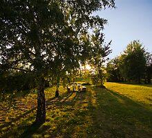 Sunset in park. by FotogalleryYury