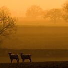 Sunset Lambs by John Passmore