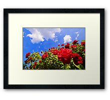 Roses and  Sky. Framed Print