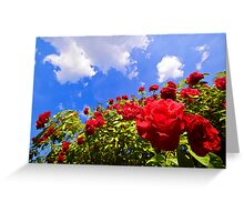 Roses and  Sky. Greeting Card