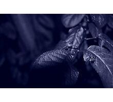 Calming Leaf Photographic Print