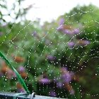 After the Rain.  A Spider`s Lacework by LumixFZ28