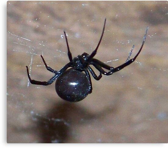 black widow spider by gabbielizzie