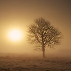 Misty Tree by James Coard