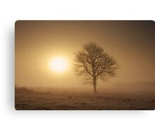 Misty Tree Canvas Print