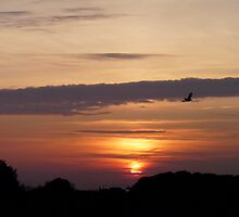 Flying Home To Roost by LumixFZ28