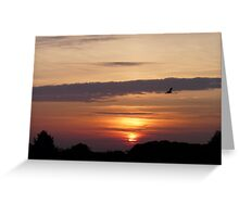 Flying Home To Roost Greeting Card