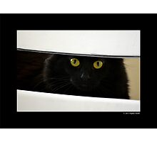 Felis Catus - Black Female Turkish Angora Cat Hiding Behind White Chair Photographic Print